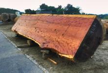 木材種類|木材図鑑